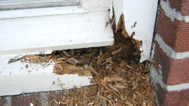 Klus hulp voor huis en bedrijf - Het repareren van kozijnen en houtconstructies buiten