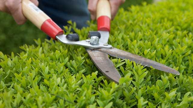 Klus hulp voor huis en bedrijf - Snoeien, verticuteren, maaien gazon, bemesten